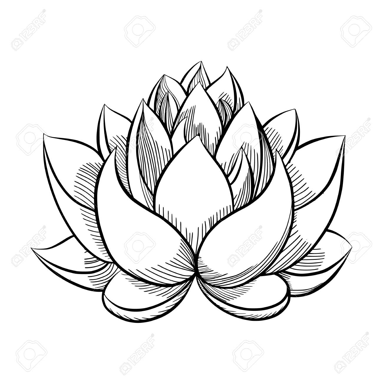 Sketch of lotus flower images fresh lotus flowers hand drawn sketch of lotus flower royalty free cliparts vectors izmirmasajfo