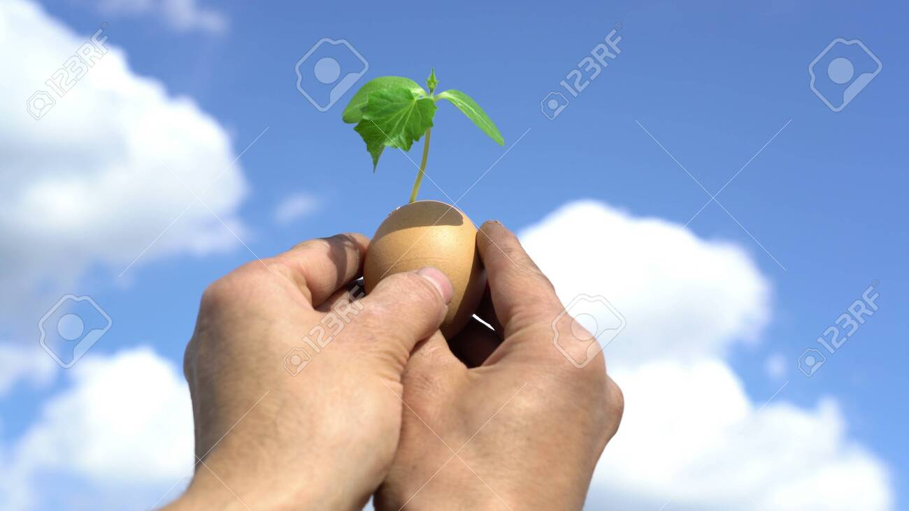 hand holding green plant sprout growing in egg, against blue sky background, new life, germinatio, springtime, beginning concept - 147969110