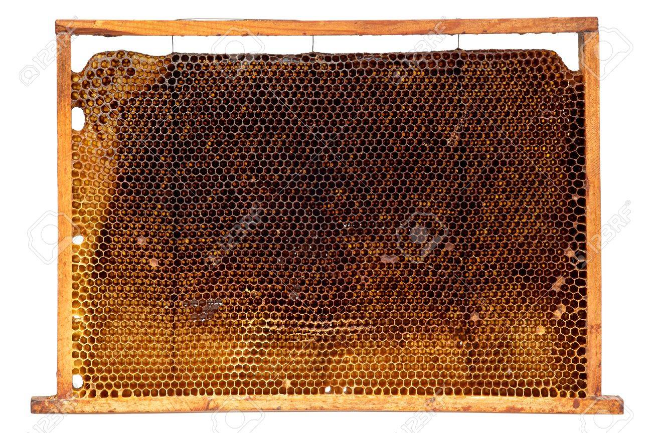 Real honeycomb removed from the hive isolated on white Stock Photo - 16438977