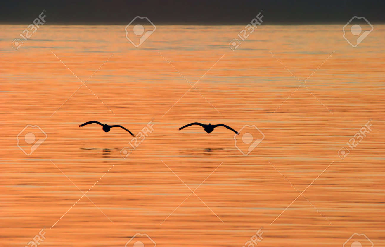 Silhouette of Canada Geese Flying Over Water at Sunset Stock Photo - 2173910