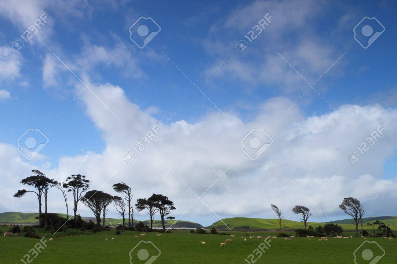 Green pastures with grazing sheep in Southland, New Zealand Stock Photo - 16831618