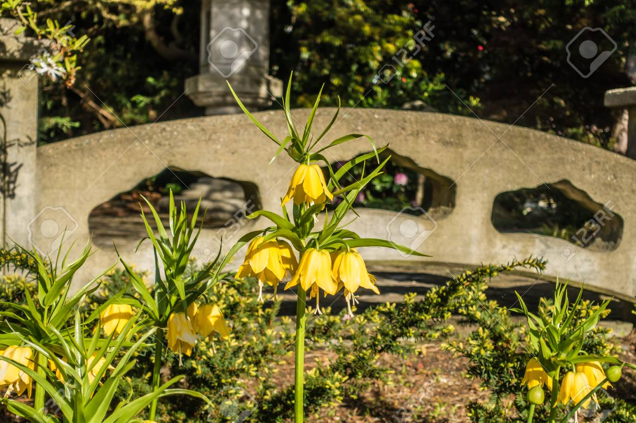 A Closeup Shot Of Yellow Bell Shaped Flowers At Seward Park In