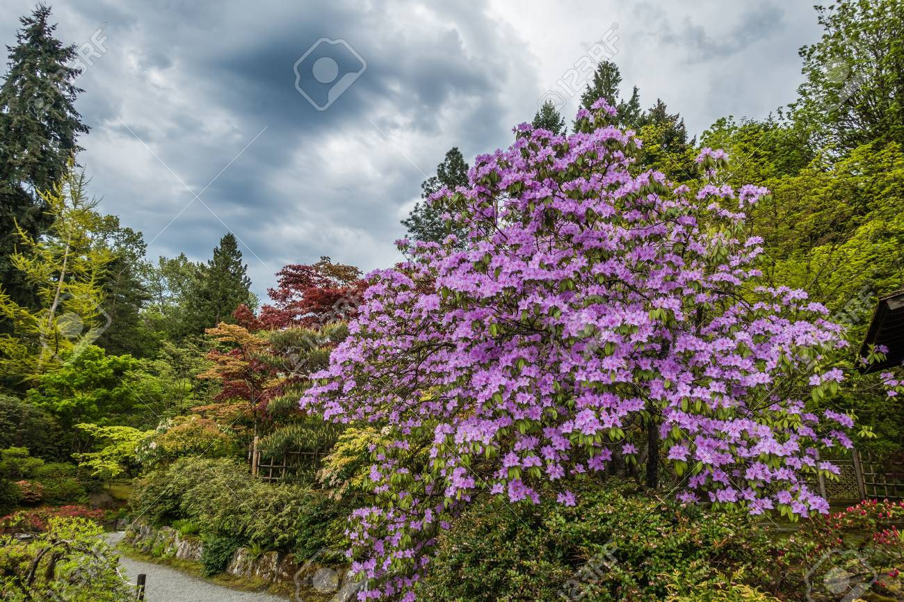 A View Of A Glorious Tree With Purple Flowers In A Seattle Garden