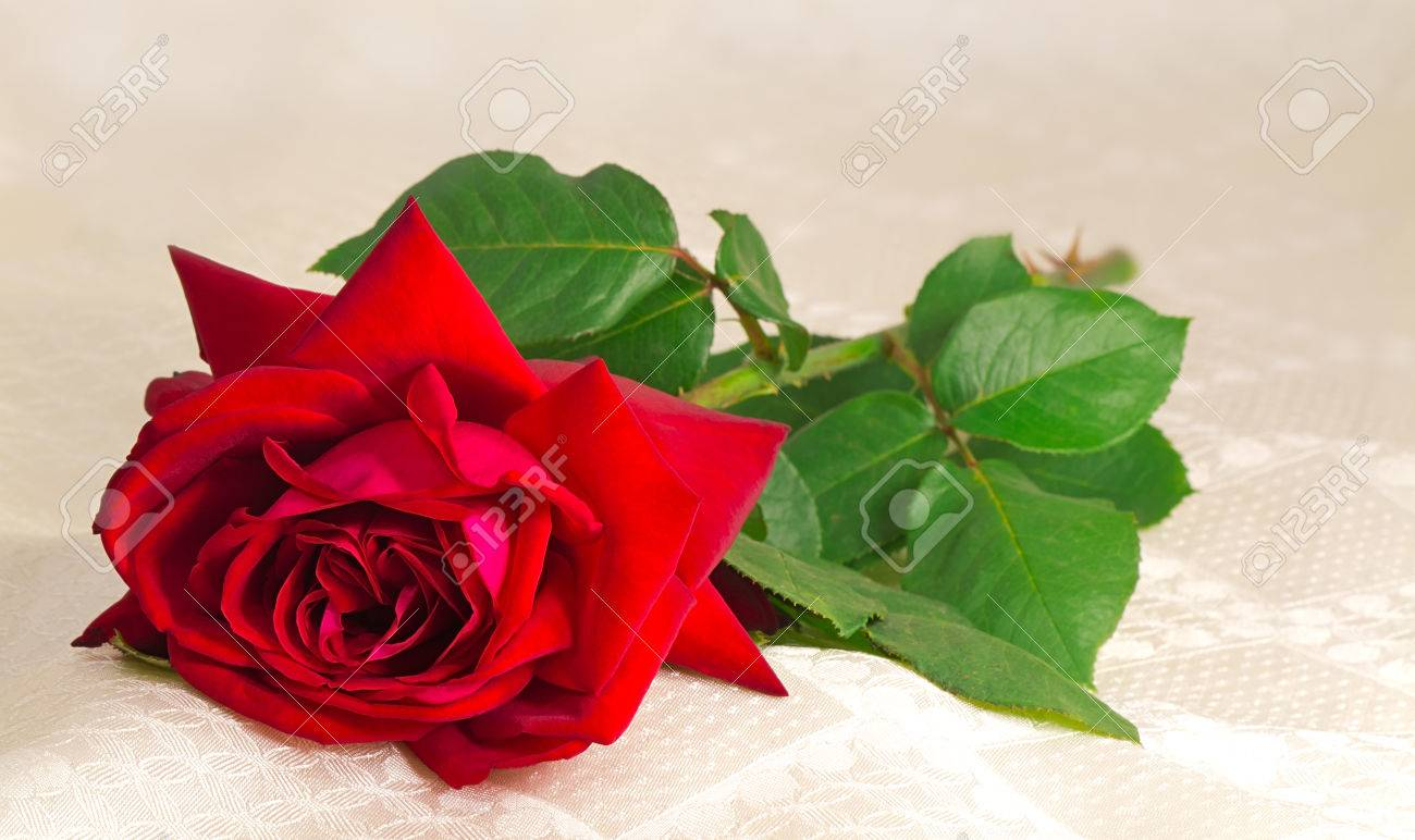 A large red rose with green leaves lies on the silk coverlet. Stock Photo - 24479213