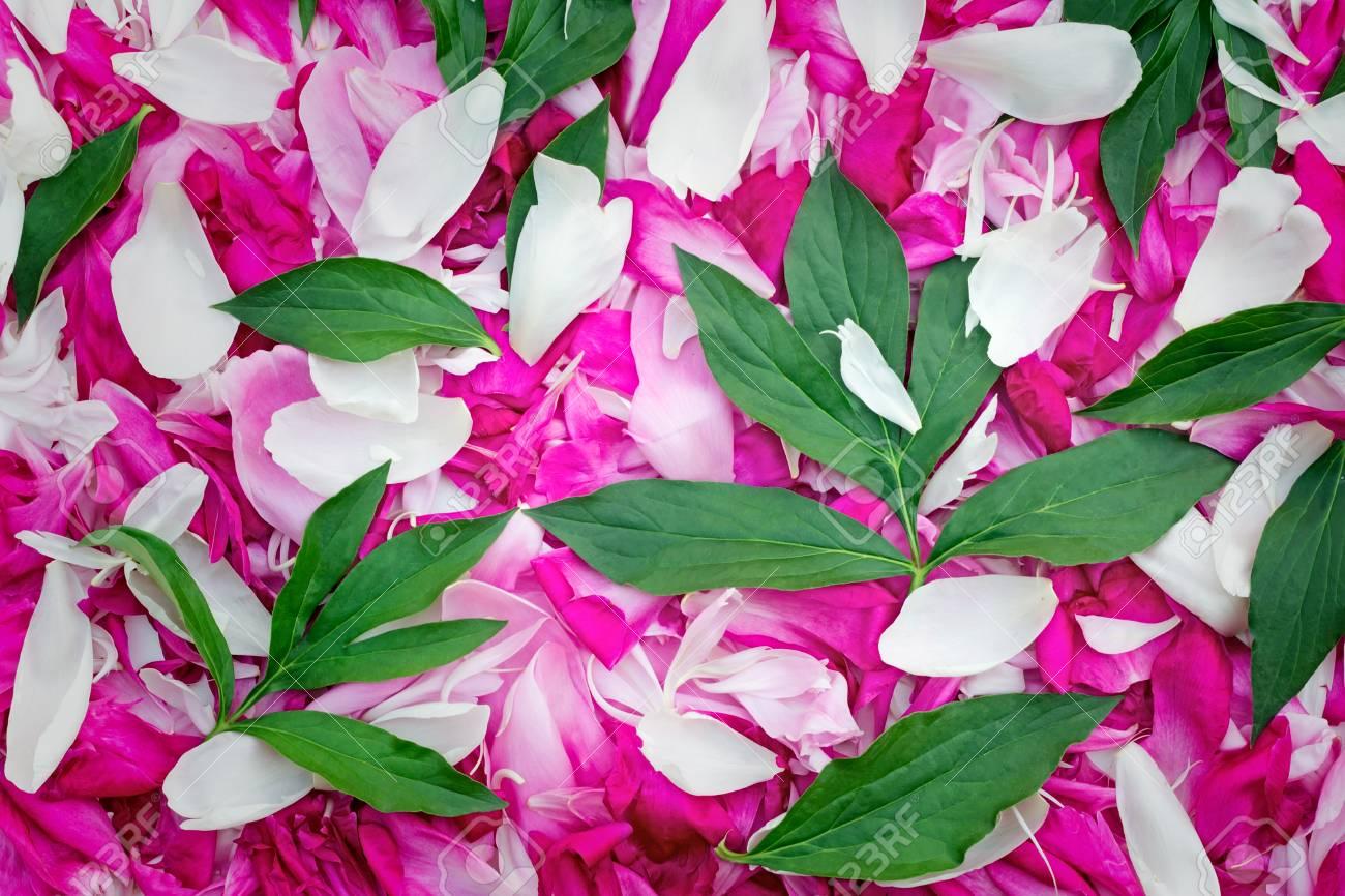 Lujoso Diseño De Uñas Rosa Imágenes - Ideas Para Pintar Uñas - knxc.info