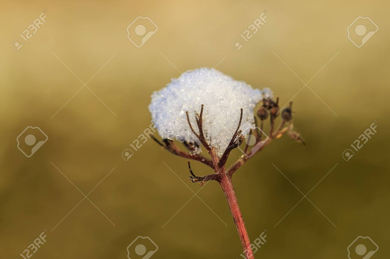 Frozen plant with snow Stock Photo - 22703640