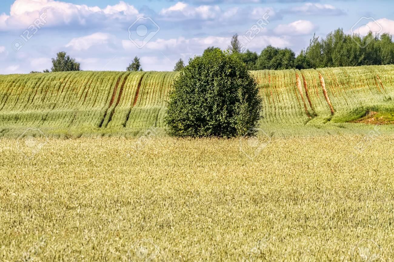 Autumn fields before harvesting grain. - 138645525