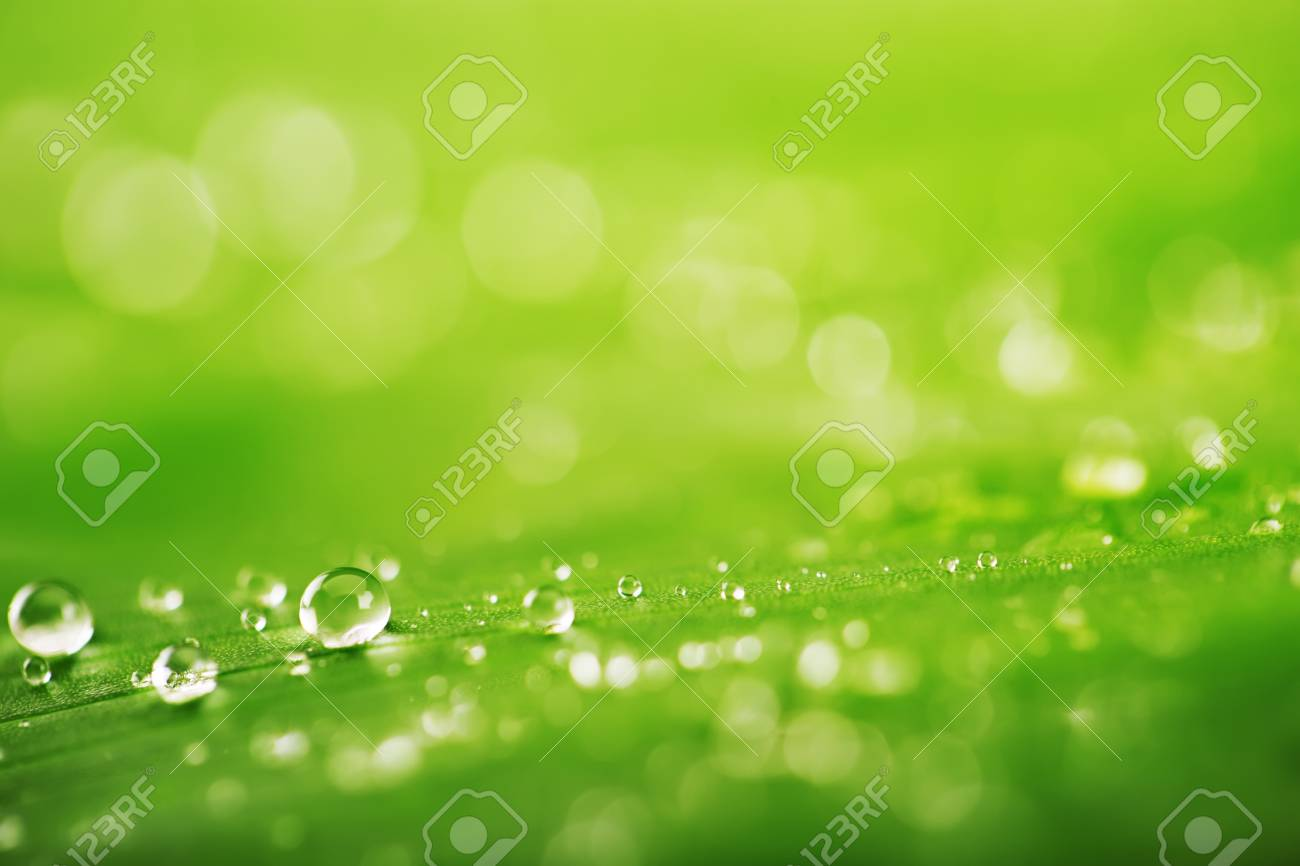 Abstract Green Leaf And Water Drops Texture For Background