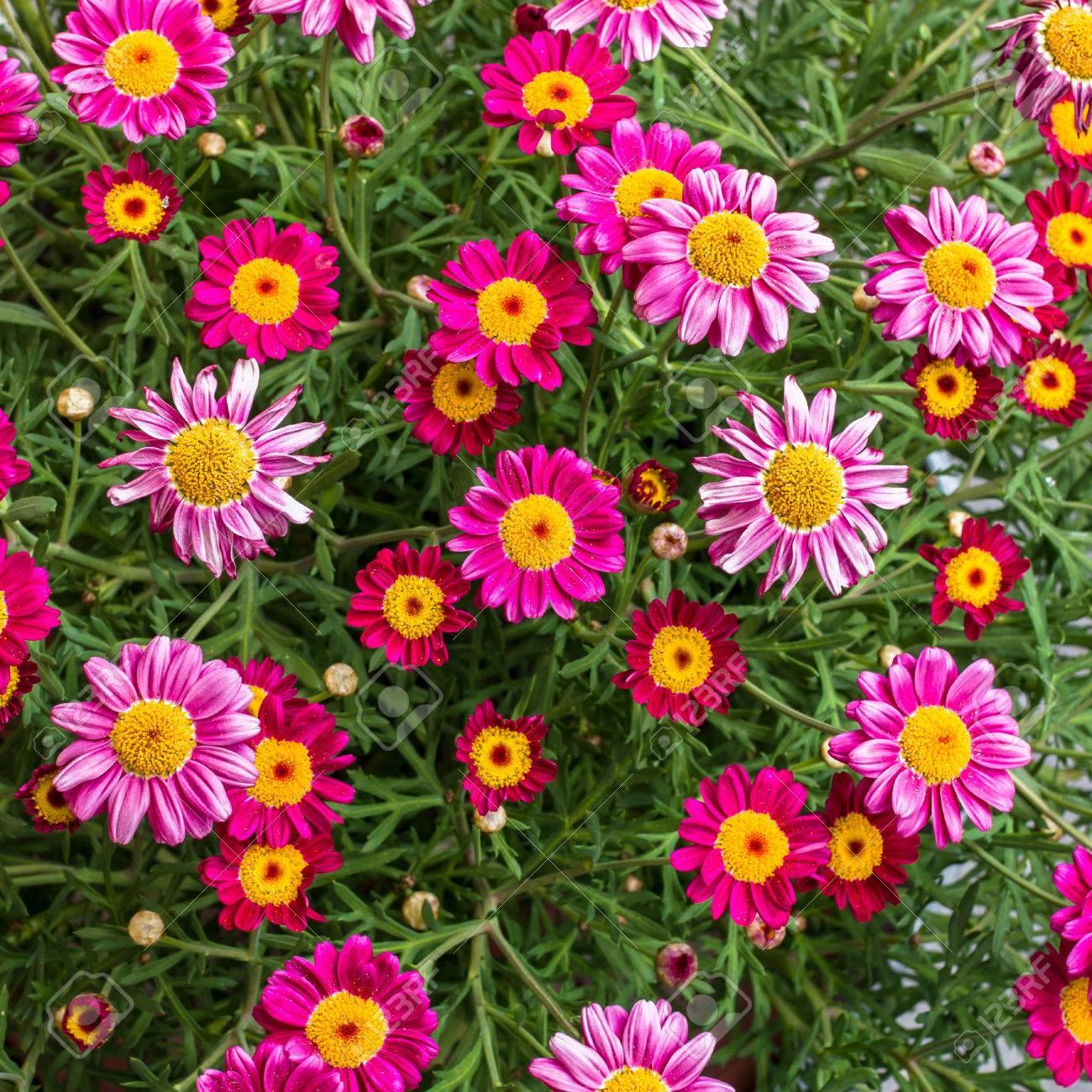 Eine Erstaunliche Reihe Von Frühlingsblumen In Hellen Farben ...