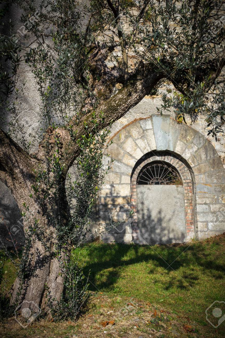 Olive Arbre Méditerranéen Planté Dans Le Jardin D\'un Château. Style ...