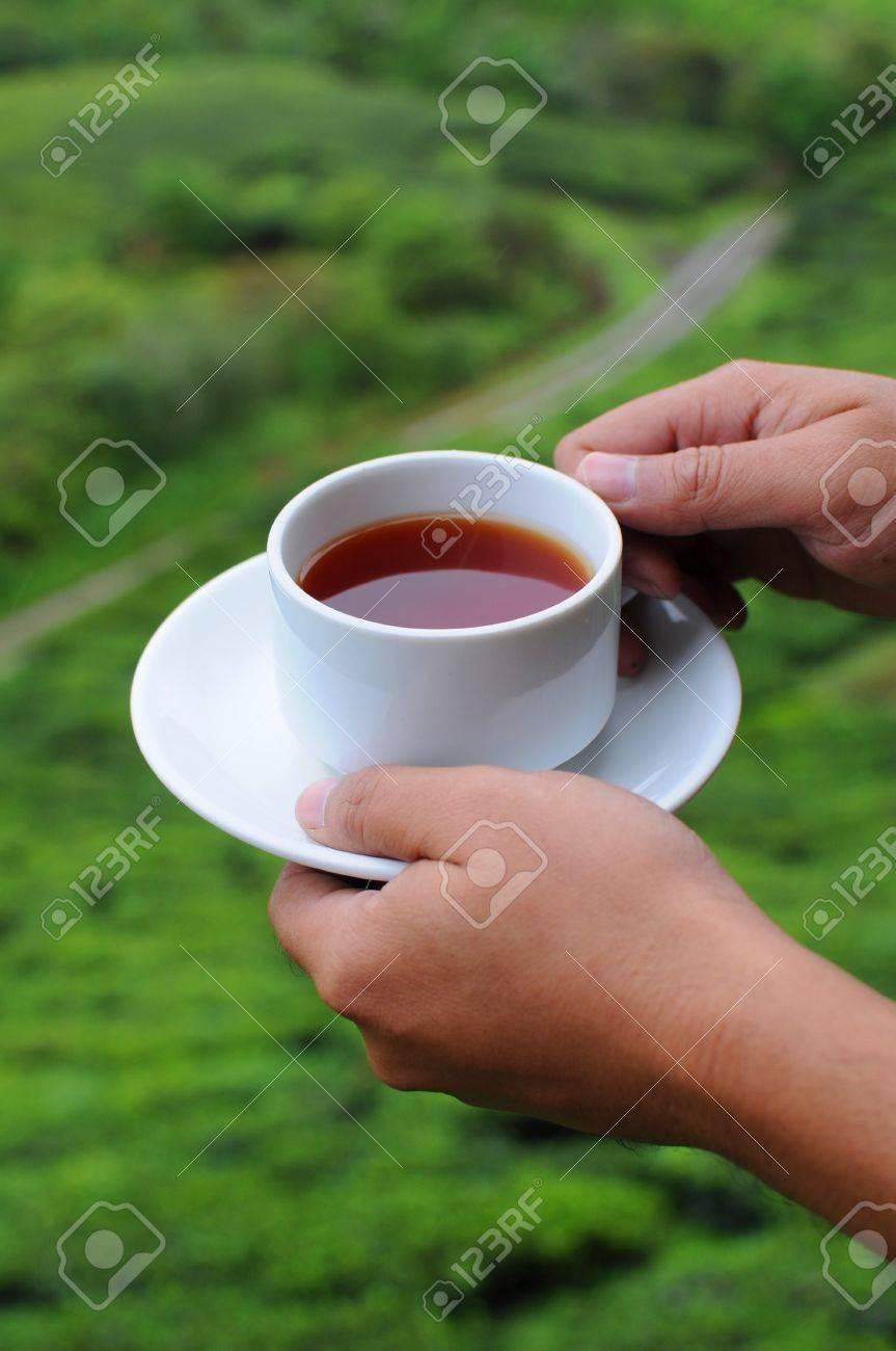 A hand holding a cup of tea on tea farm background Stock Photo - 8706337
