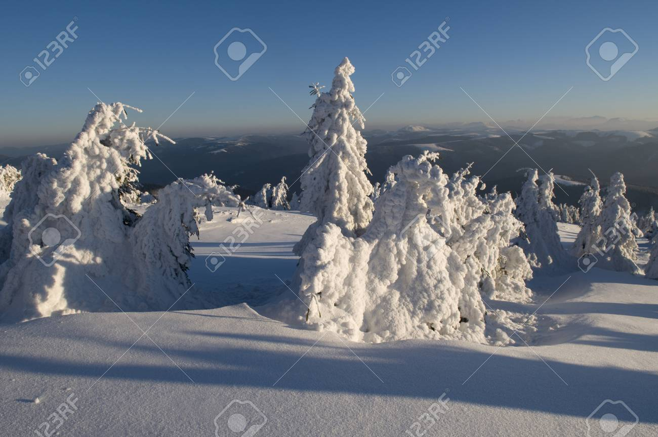 This is tranquil morning in Carpathian Mountains, Ukraine   Frosty trees look  like a fairy-tale character Stock Photo - 16158663