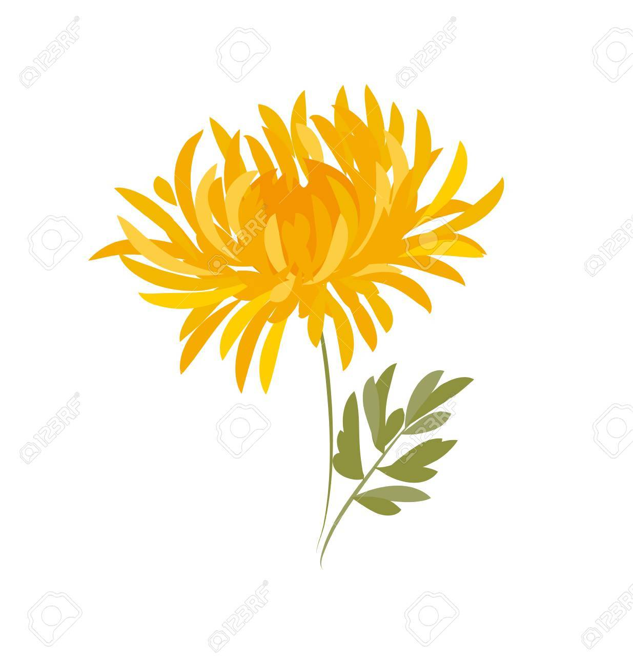 Autumn chrysanthemum flower golden daisy floral vector illustration autumn chrysanthemum flower golden daisy floral vector illustration decorative elegant brightly colored ornamental izmirmasajfo