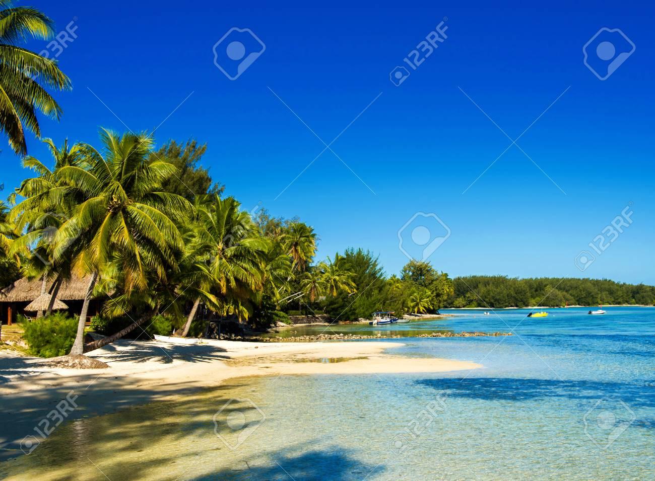 View Of The Sandy Beach Moorea Island French Polynesia Copy