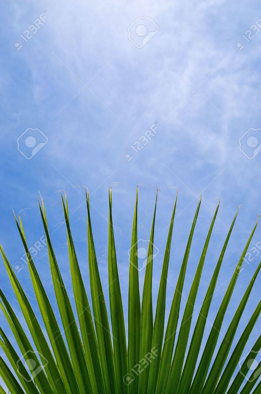green palm leaf on a blue sky Stock Photo - 5089651