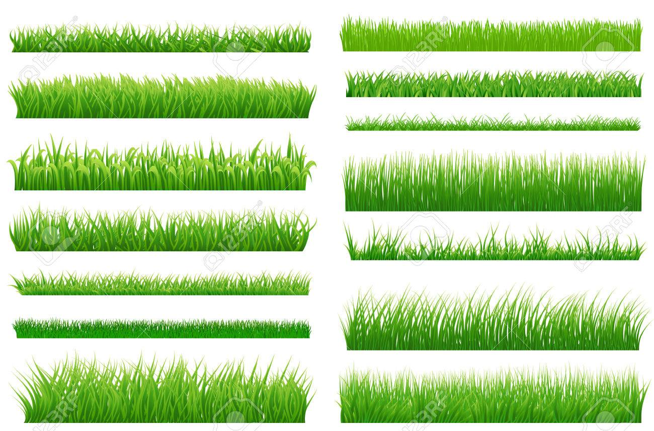 Set of spring green grass horizontal borders. Green grass collection on white background for Your design. Design elements for natural landscape with grass. Various types of green grass. Vector - 53750020