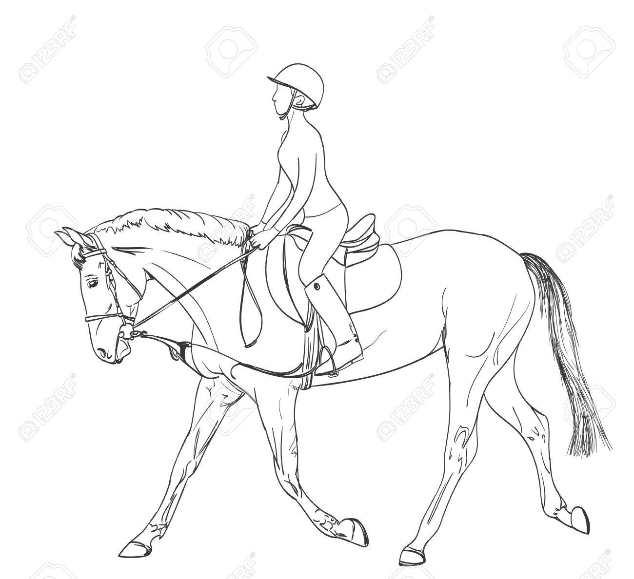 horse rider line art drawing. equestrian sport training theme illustration. vector - 62142074