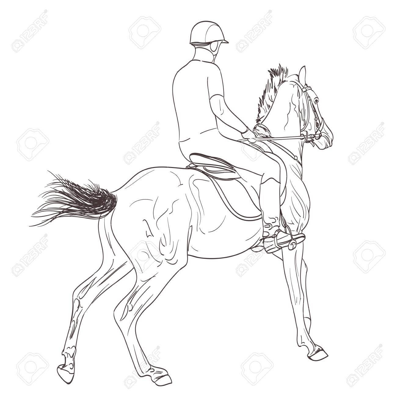 Horse Rider Line Art Hand Drawn Illustration Equestrian Sport Royalty Free Cliparts Vectors And Stock Illustration Image 62142078
