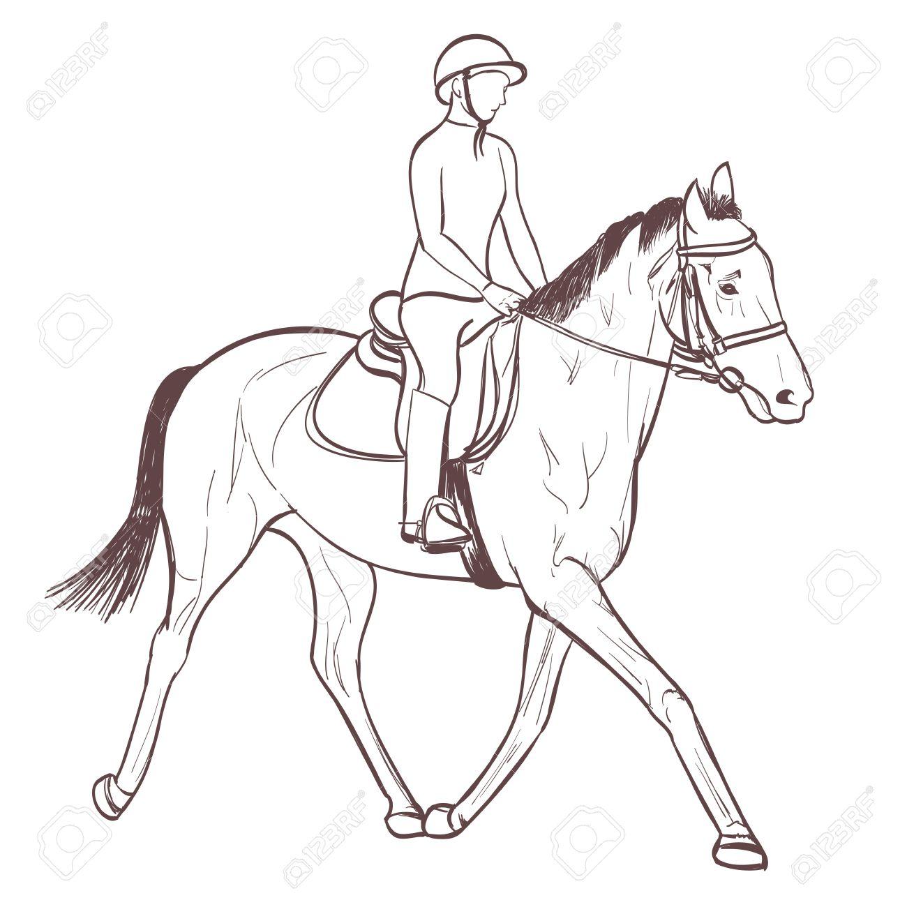 Vector A Horse Rider Drawing Equestrian Sport Training Lineart Vector A Horse  Rider Drawing Equestrian Sport