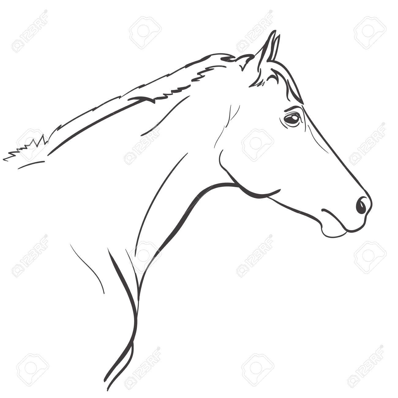 Horse Head Line Art Hand Drawn Illustration Vector Royalty Free Cliparts Vectors And Stock Illustration Image 62334798
