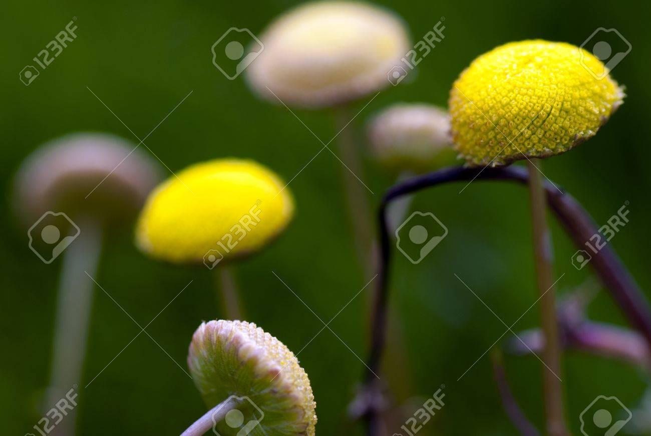 Una Vision Macro De Pequenas Flores Silvestres Amarillas Fotos