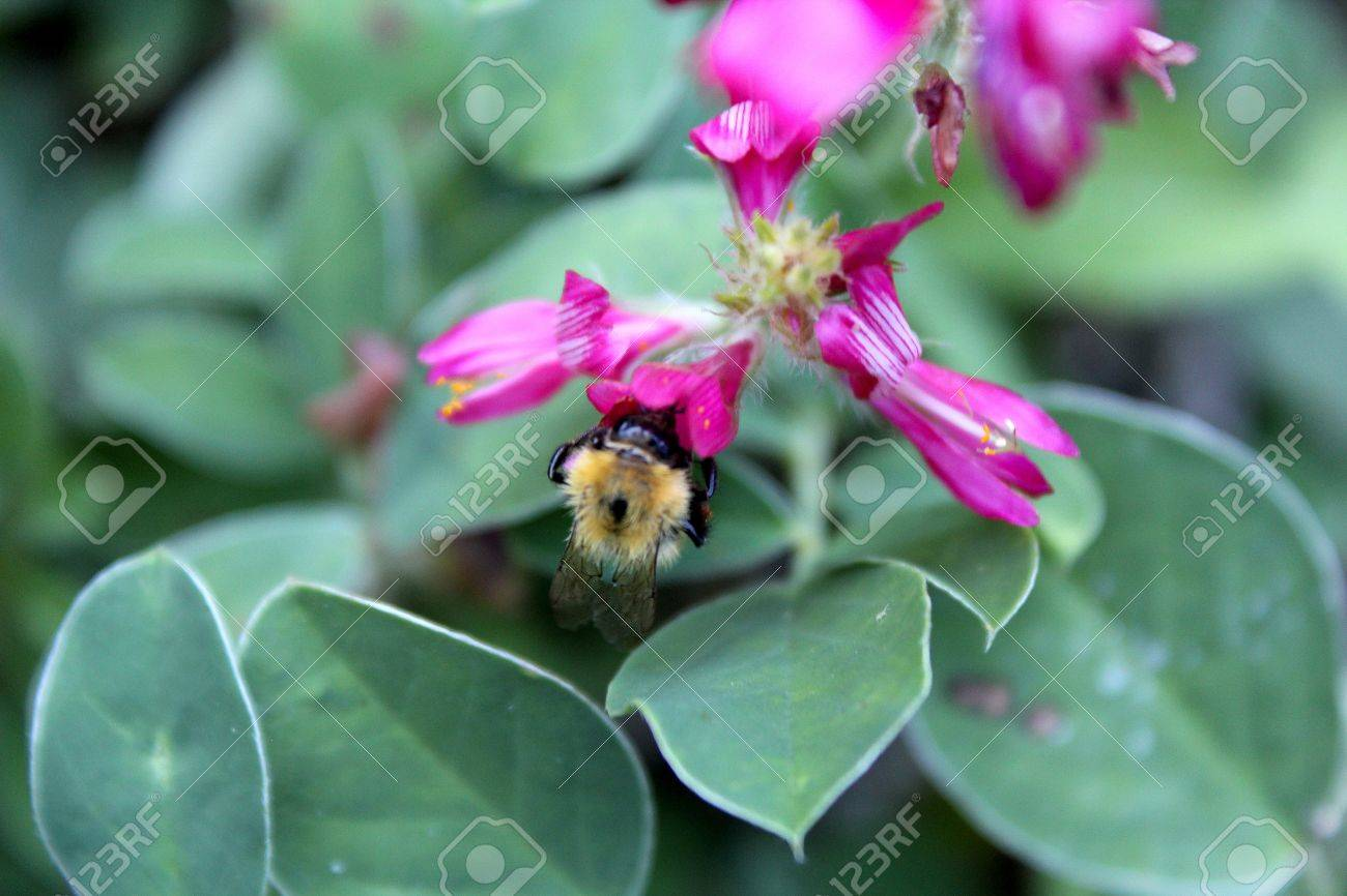 bee sucking nectar from a flower Stock Photo - 10033138