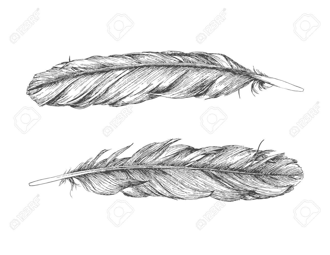 Line Art Feather : Hand drawn feather isolated on white background back and front