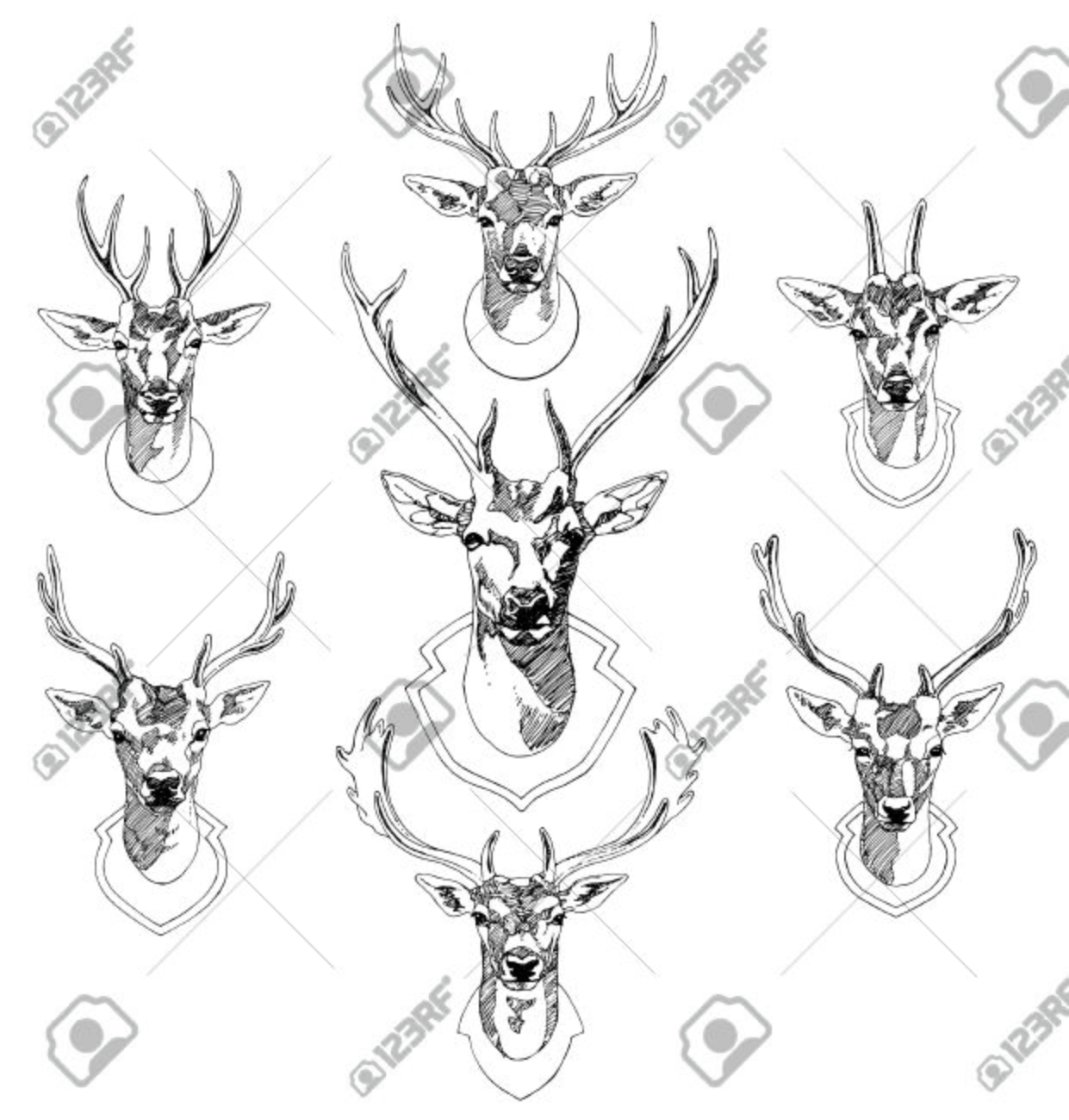 Set of hand drawn deer heads trophies sketch drawing illustration stock vector 38698500