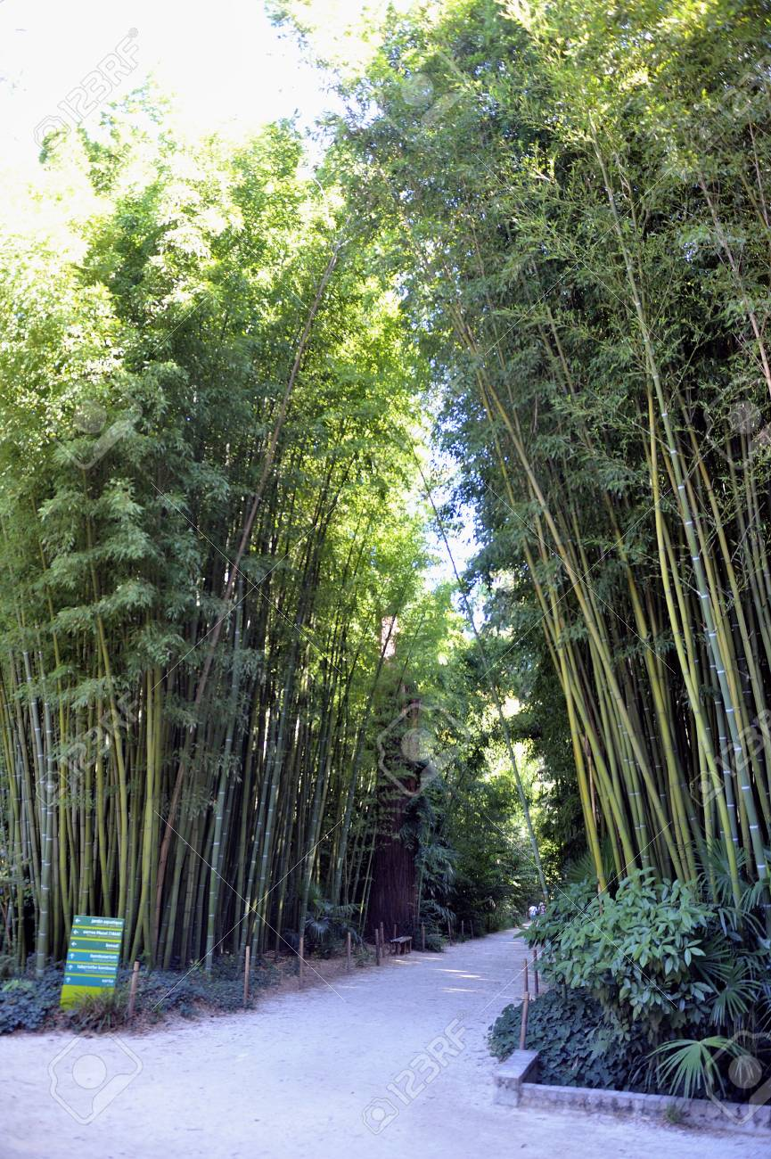 Gate Of The Japanese Garden Entrance In Park Anduze Bamboo Where Almost All  Species Are Represented