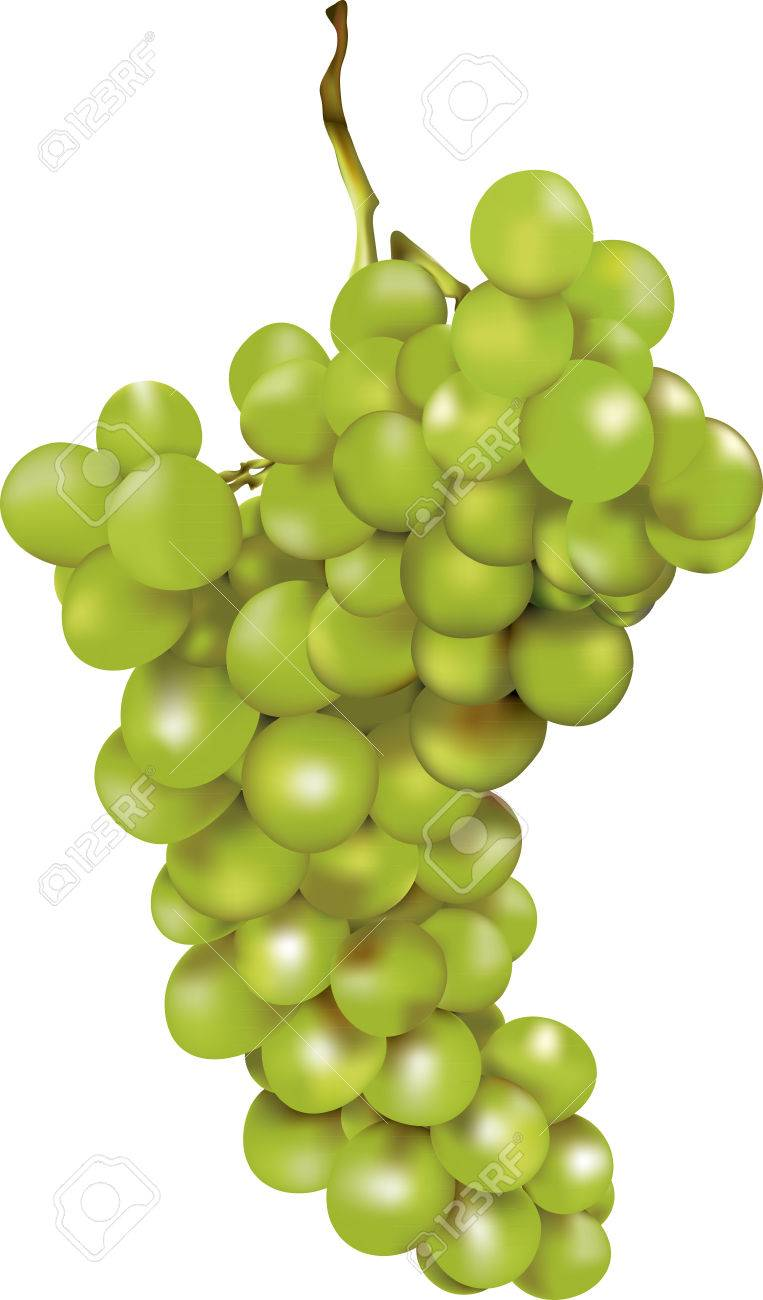 green bunch of grapes with a luminous shining after rich harvest in autumn Stock Vector - 8842998