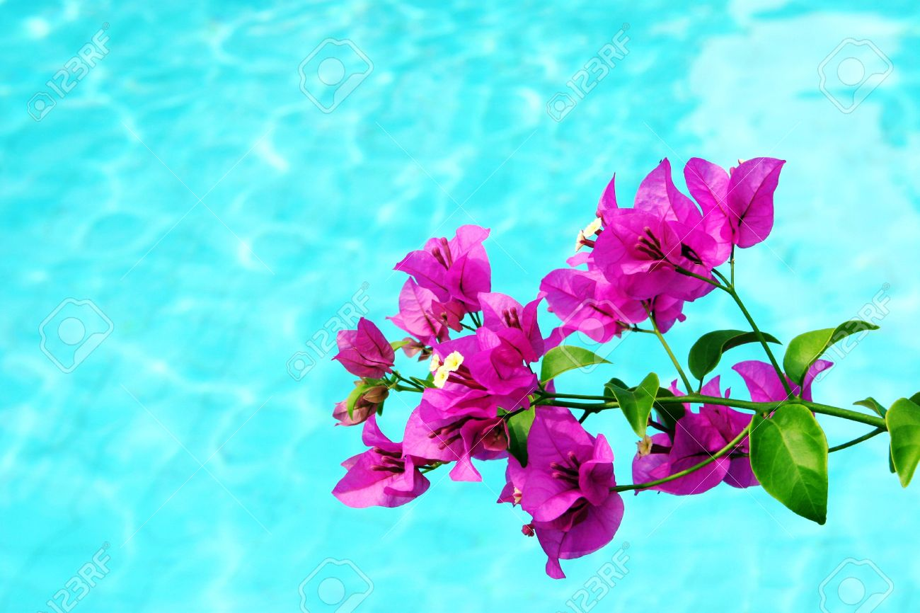 Tropical pink flowers hanging over water stock photo picture and stock photo tropical pink flowers hanging over water mightylinksfo