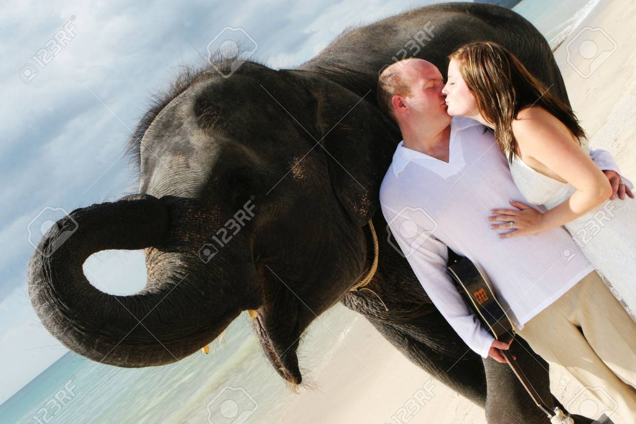 Bride and groom with an elephant on the beach. Stock Photo - 4665308