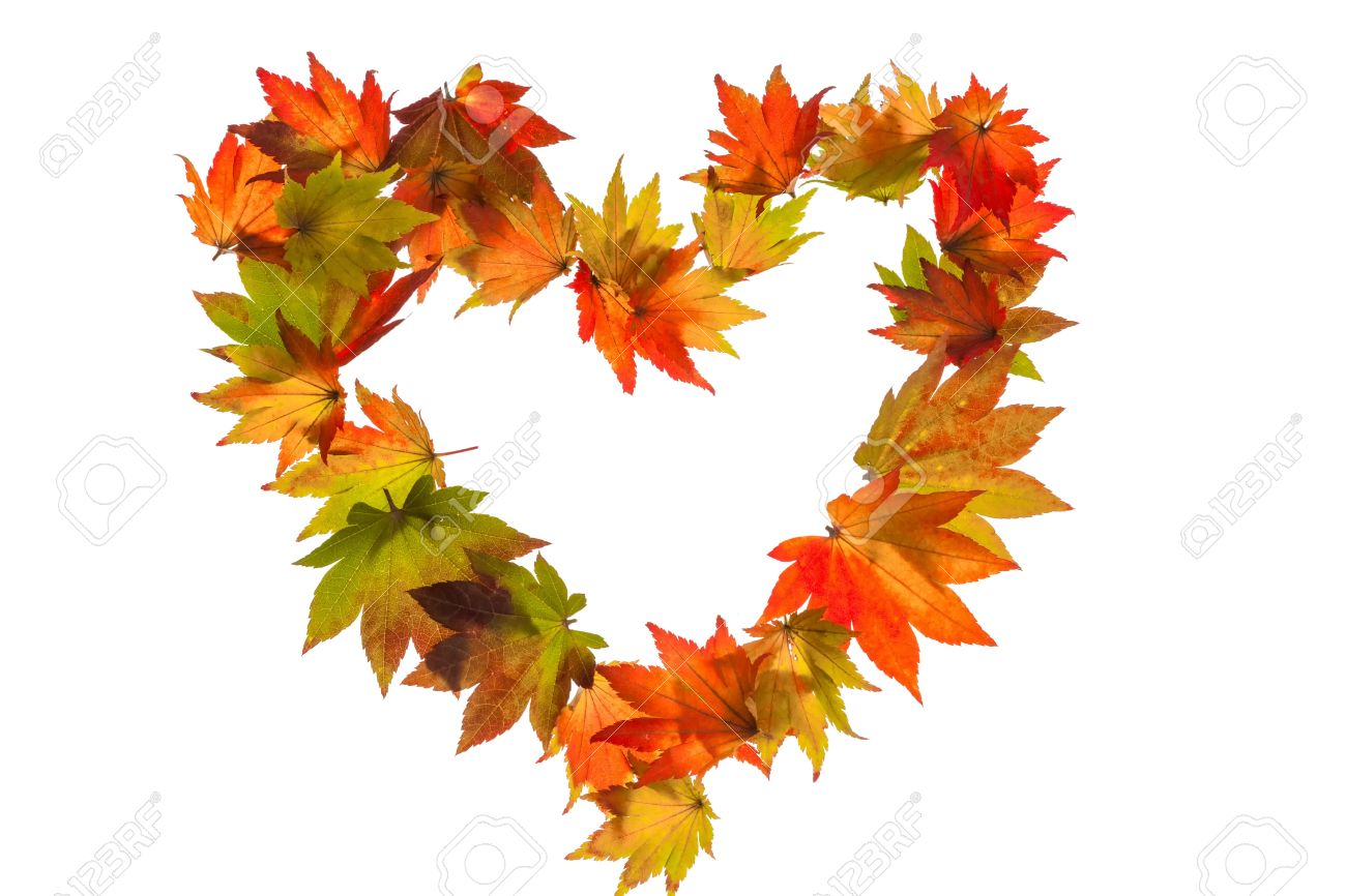 Autumn Leaves On A White Background In A Heart Shape Symbol For Love Stock  Photo