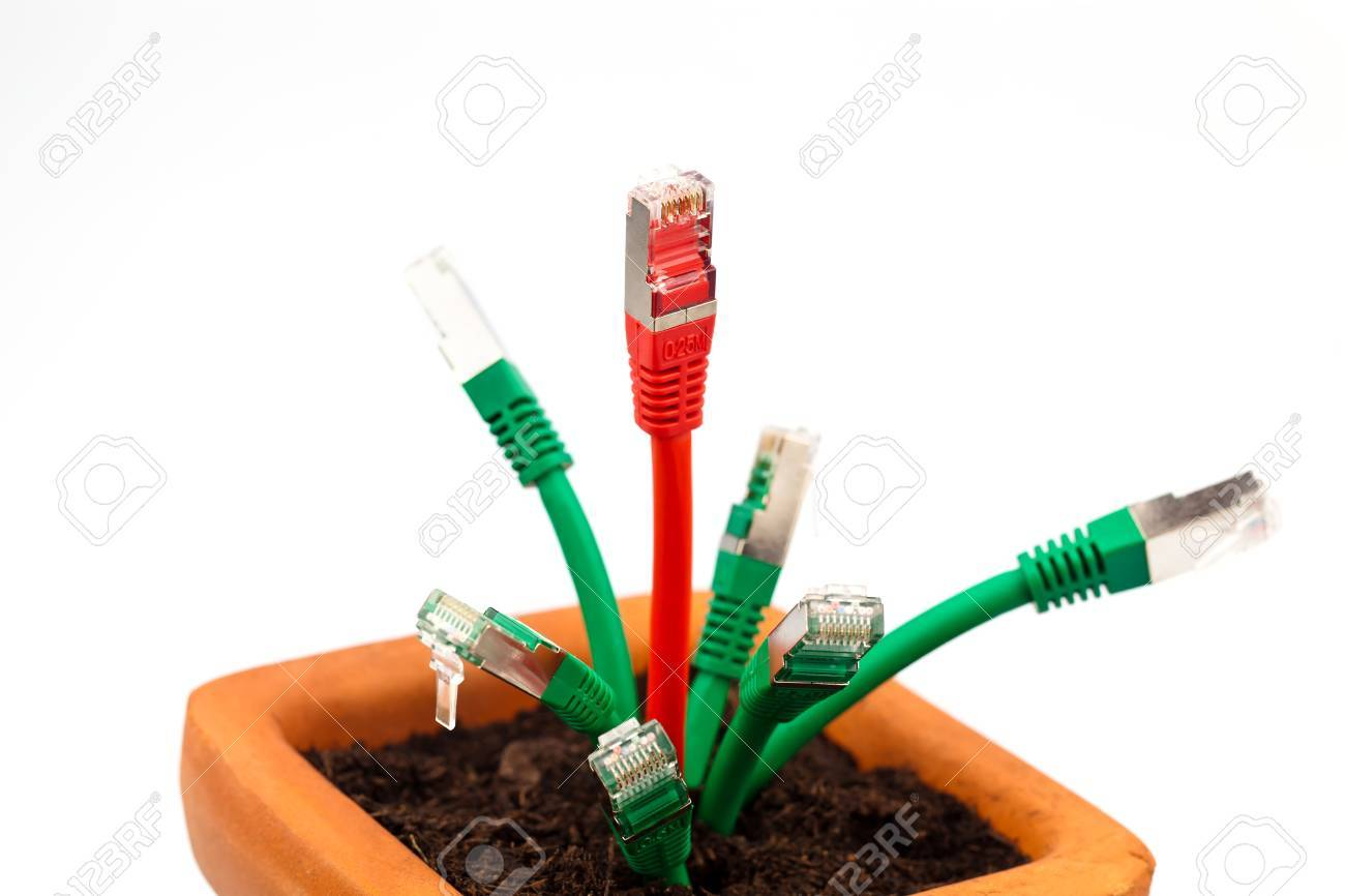 various network cable in a flower pot  symbolic of broadband and internet development Stock Photo - 16327749