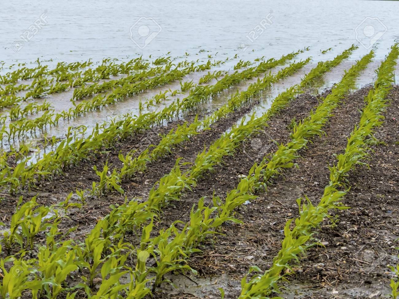 flooding in agriculture Stock Photo - 20771328