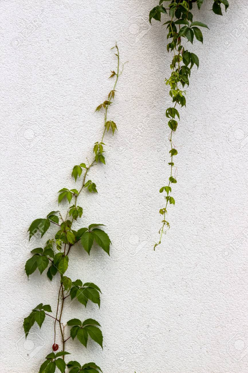 Plant growing upwards and downwards symbolic photo for expansion plant growing upwards and downwards symbolic photo for expansion rise differences stock photo biocorpaavc Gallery