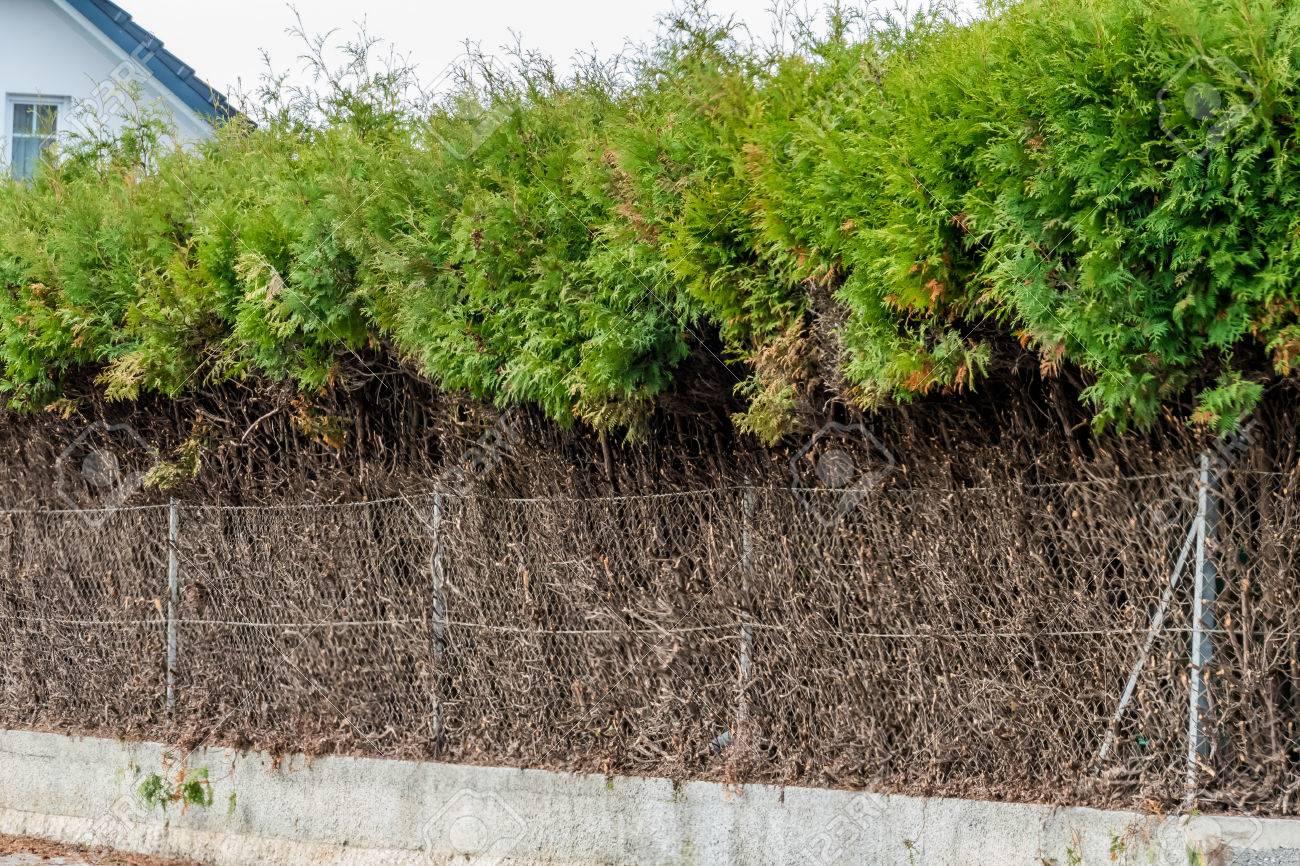 Zaun Und Grunen Hecke Ein Symbol Fur Wachstum Schutz Der