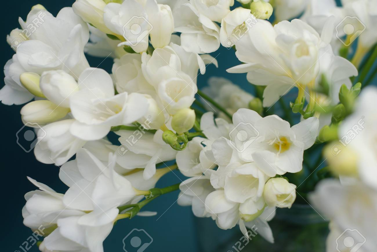 White freesia bouquet of flowers on black background stock photo stock photo white freesia bouquet of flowers on black background izmirmasajfo