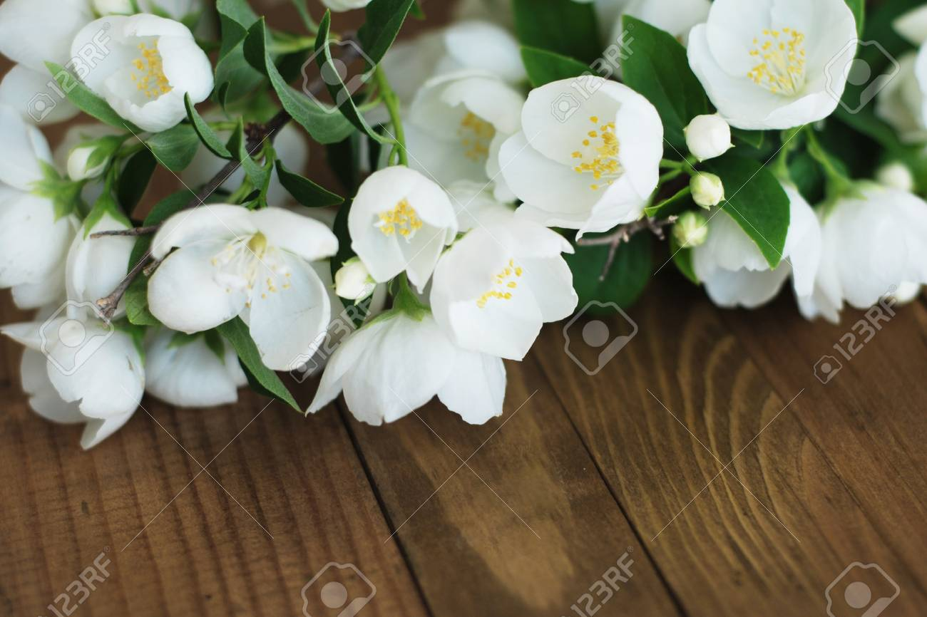 White jasmine flowers little white flowers on brown old wooden stock photo white jasmine flowers little white flowers on brown old wooden background space for text izmirmasajfo