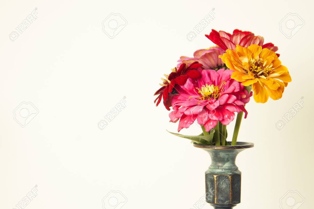 Bouquet Of Pink Zinnia Flowers In A Vase Isolated Indoor Stock Photo Picture And Royalty Free Image Image 108678392