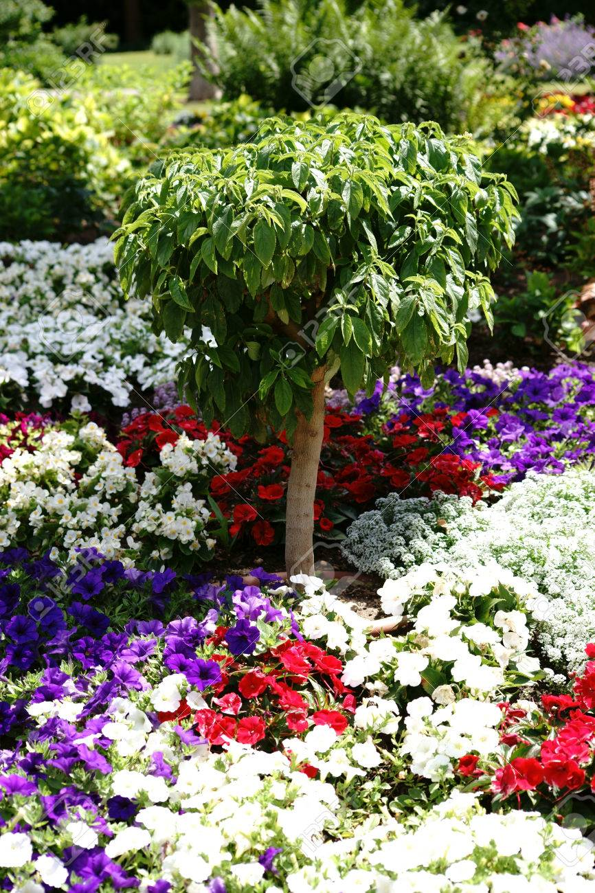 A Small Ornamental Tree Stands In The Middle Of A Colorful Garden Stock Photo Picture And Royalty Free Image Image 81866566