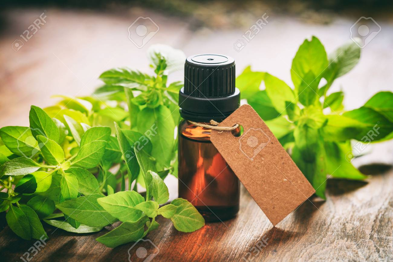 Fresh basil twig and oil on wooden background - 67315394