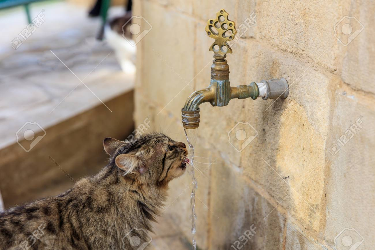 Cat Colorful And Thirsty Is Drinking Water From A Faucet. Blurred ...