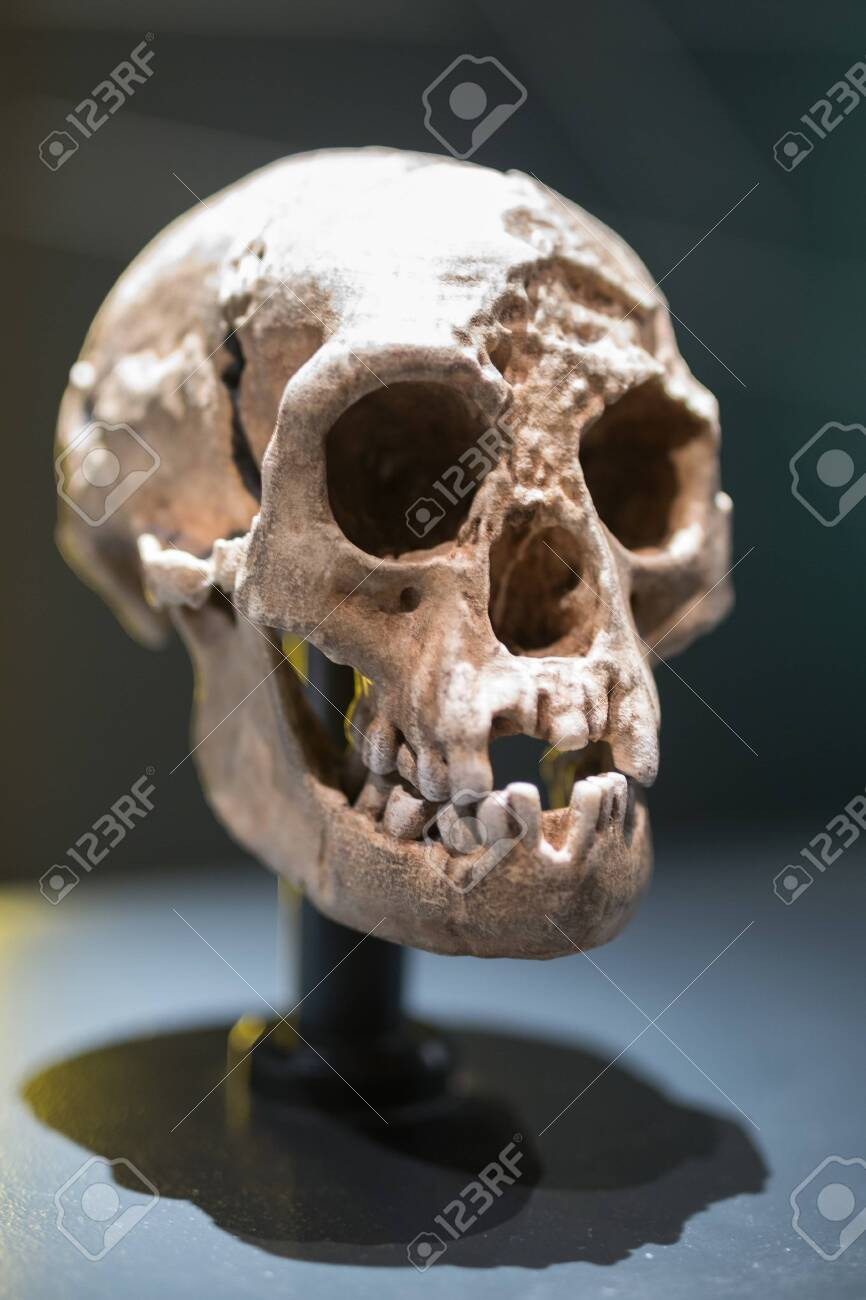 Reconstruction of a Human Skull of Prehistoric Ages. - 140609285