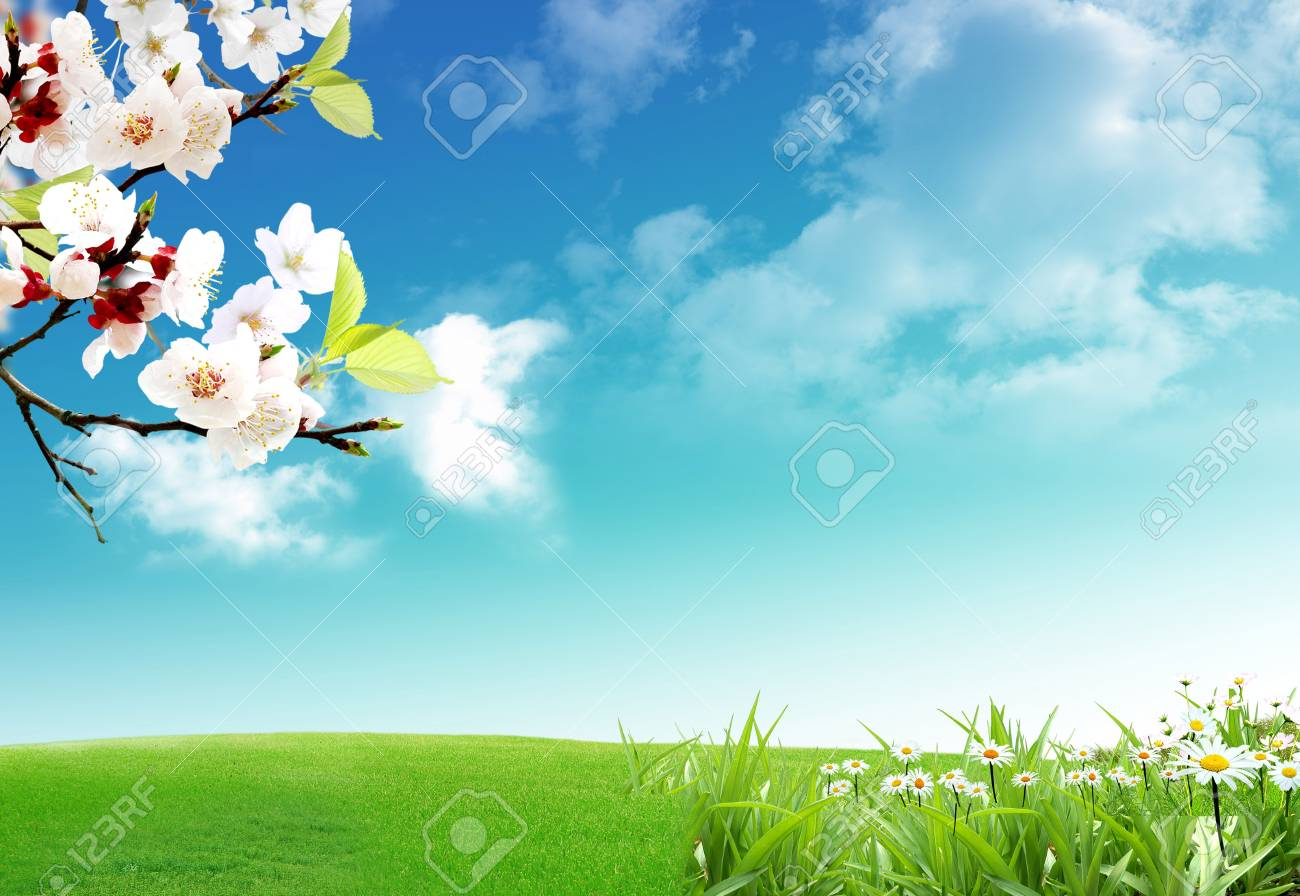 Spring when the nature wakes up from the winter a long sleep Stock Photo - 6235481