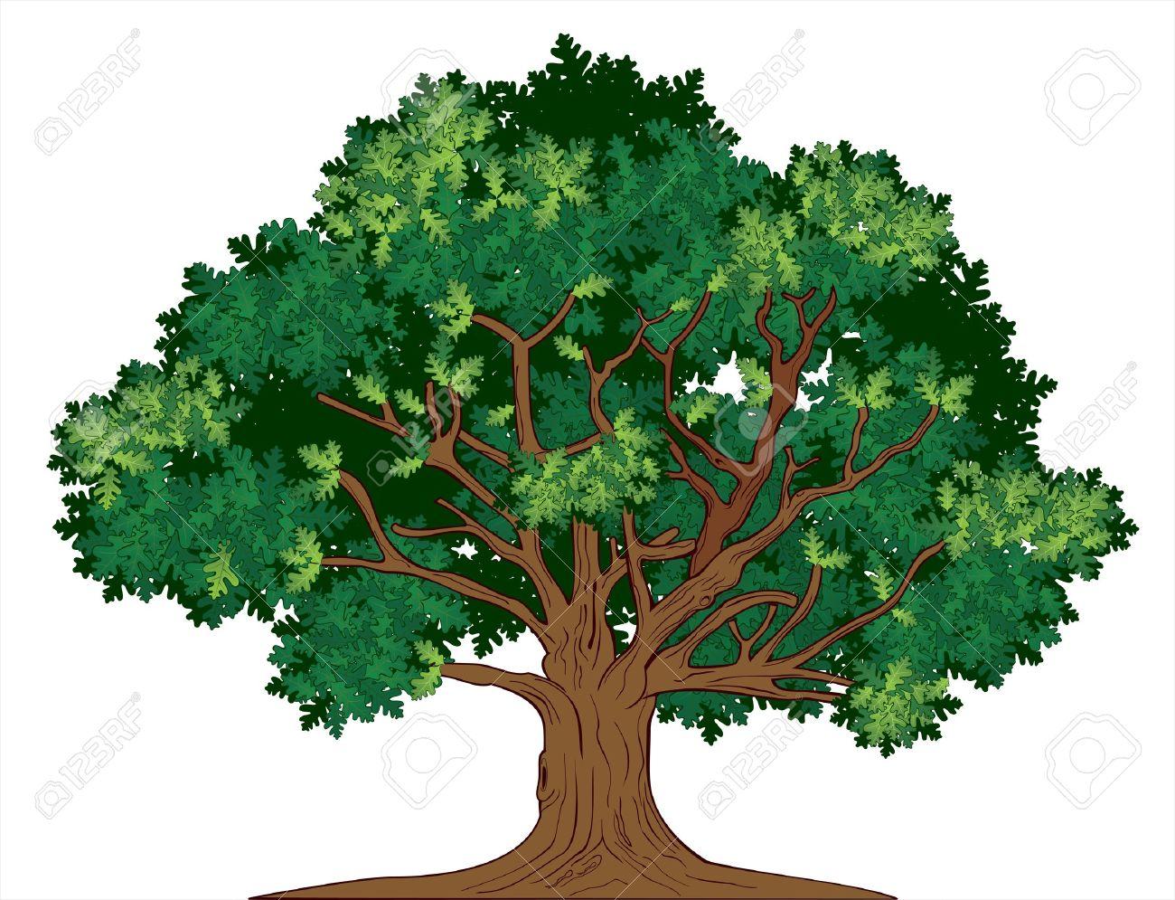 Vector illustration of old green oak tree - 16060264
