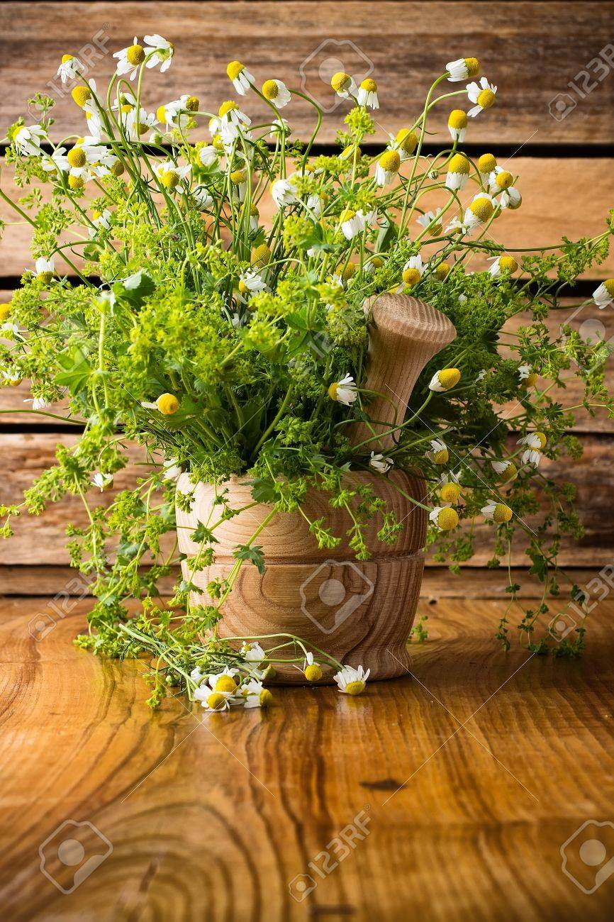 Chamomile flowers in mortar on a wooden surface  Chamomile aromatherapy Stock Photo - 20193268