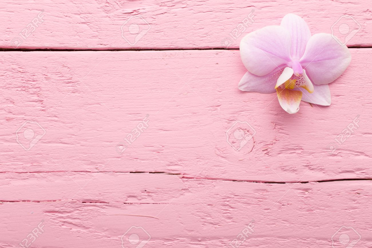 Pink Orchid Flowers On The Pink Pastels Background Stock Photo