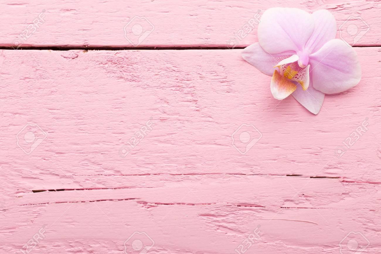 Des fleurs d\u0027orchidée rose sur le rose pastel fond.