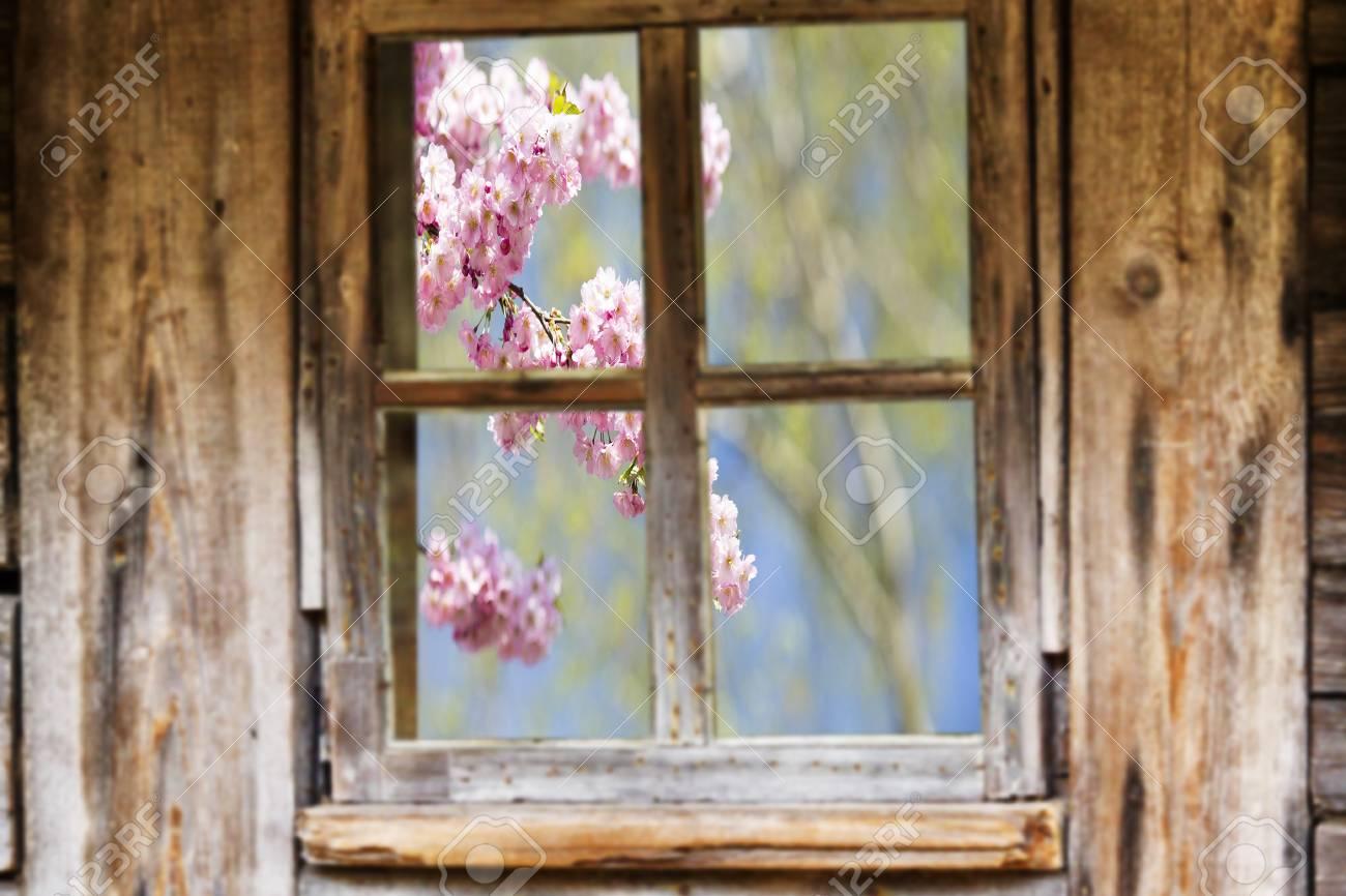 Hölzernen Fensterrahmen, Frühling, Blühende Bäume. Lizenzfreie Fotos ...